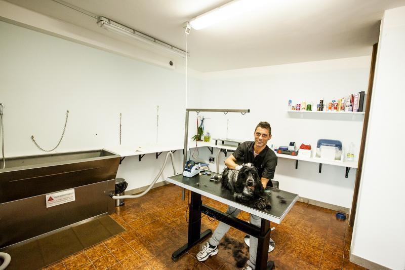 La sala di toelettatura professionale - Wellness Dog