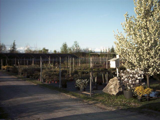 Galleria fotografica di Azienda Agricola Vivai Del Zotto